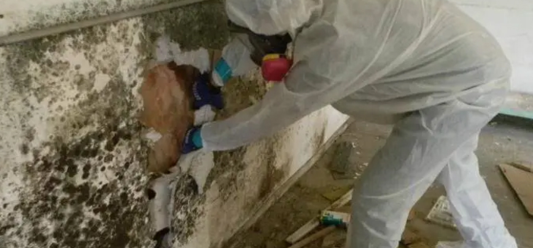 black-mold-removal in Dubai